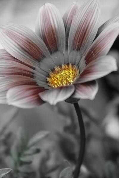 Wild Flower 118