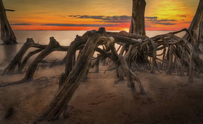 Cypress Cove Sunset by phillip_brossette - Image of the Year Photo Contest by Snapfish