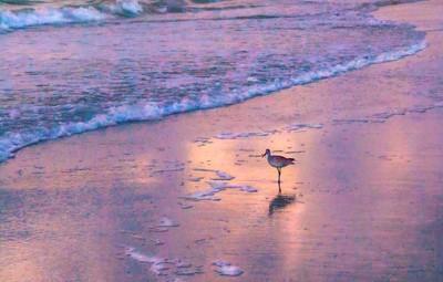 sea bird surf