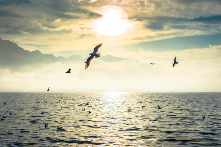 As Free as Bird...