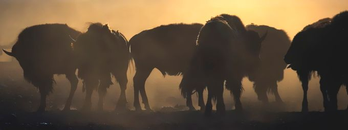 In the herd by jessebrownnelson - Magical Light Photo Contest
