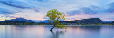Lonely Tree   Lake Wanaka
