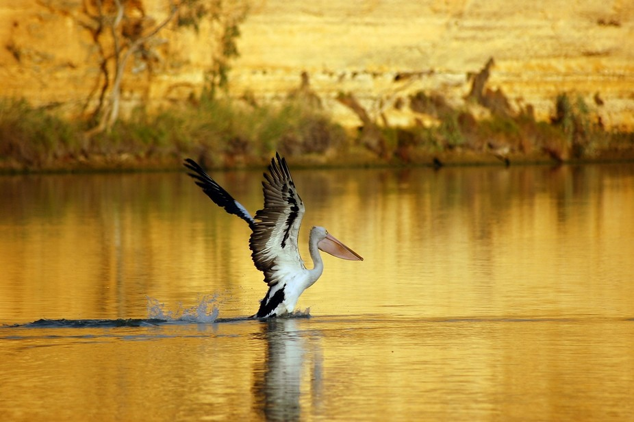 Taken while houseboating on th Murray river in South Australia. The golden hue caused by the sun ...