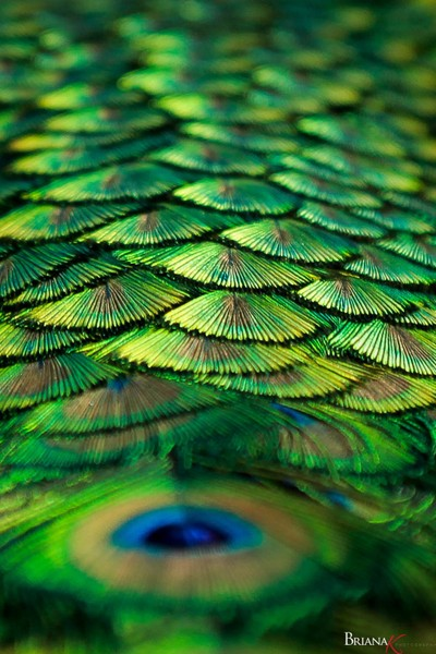 Pathway of Feathers
