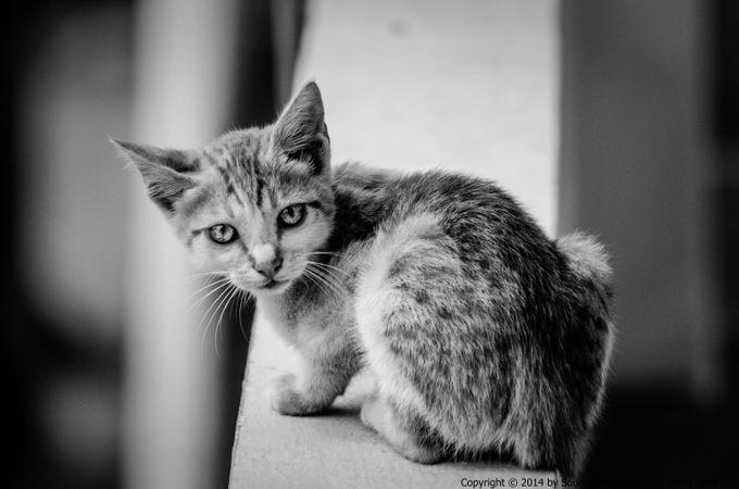 The cat by SaintMarino - Cute Kittens Photo Contest