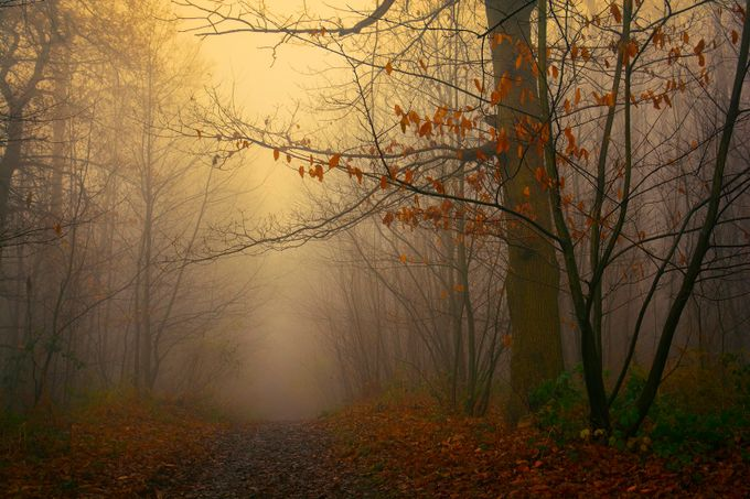 Winters Pathway by beckywheller - Dark Forest Photo Contest