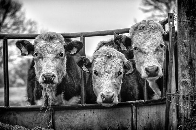 Little different models :-) by Chris_Photoshooter - Farms And Barns Animals Photo Contest