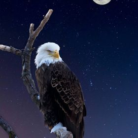 This is a composite made in Photoshop of 3 pictures that I took!  I love the concept as I feel he looks as if he is watching over the night!!  In...
