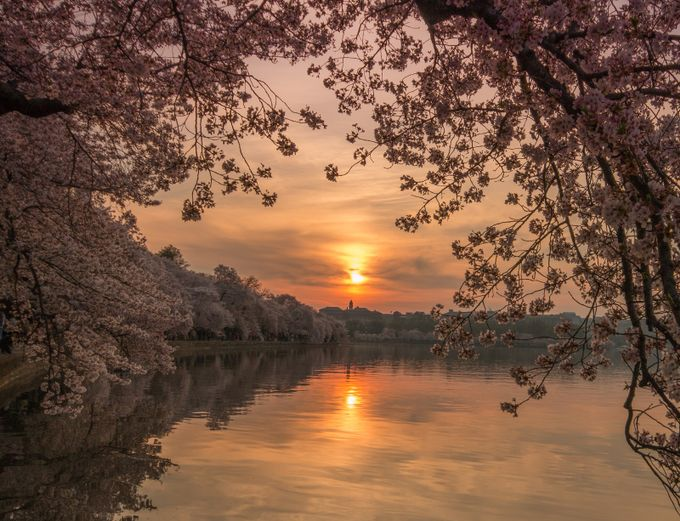 DC Tidal Basin Apr 14 by VisualArt - Light On Water Photo Contest