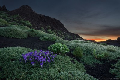 Violets during the sunrise