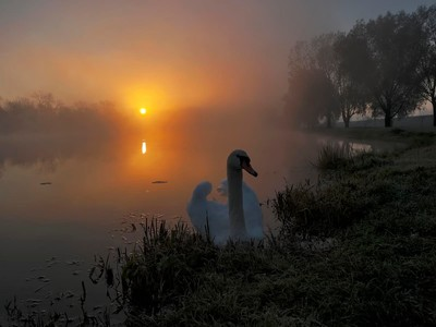 Dawn at the pond
