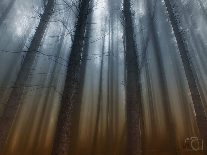 Mistic Forest by nikosladic - Tall Trees Photo Contest