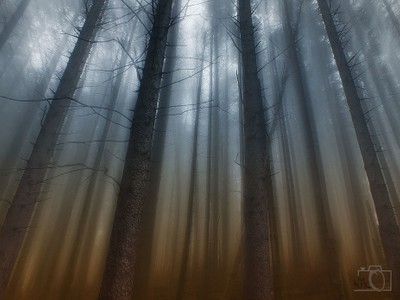 Mistic Forest