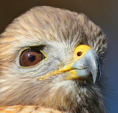 A Birds Eye View!
