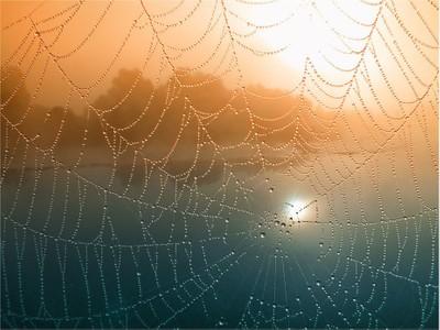Landscape in Net