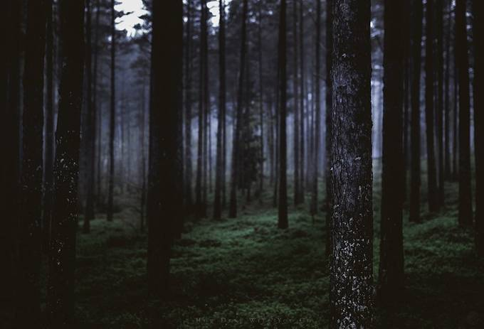 How deep will you go by HappyMelvin - Dark Forest Photo Contest