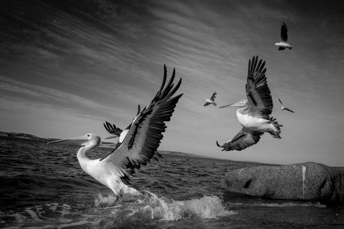 Taking Flight by p-jtaylor - A Black And White World Photo Contest
