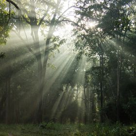 Sun rays penetrating the forest canopy
