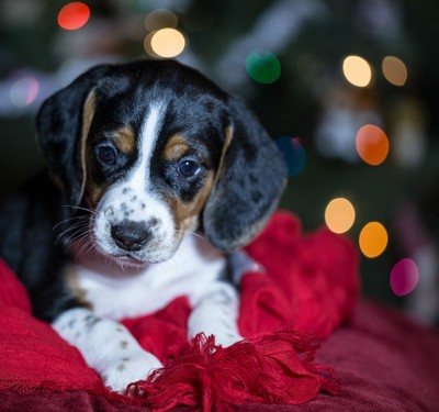 Dylan the rescue puppy at his glamour shoot