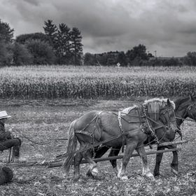 Amish working the land
