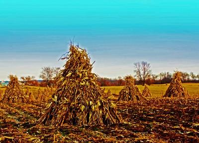 Corn Stalks_edited-5