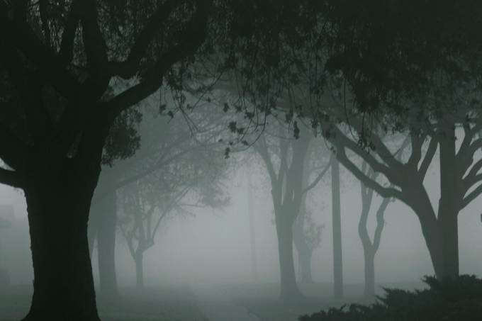 Into The Mist by Blue-Maddness - Silhouettes Of Trees Photo Contest