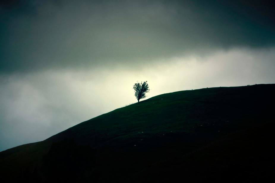 A lonely tree standing on a hill side in the country outside of Palmerston North, New Zealand. Th...