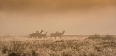 Family_of_Deer