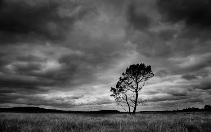 Lone Pine by magnetoman - Cloud Painting Photo Contest