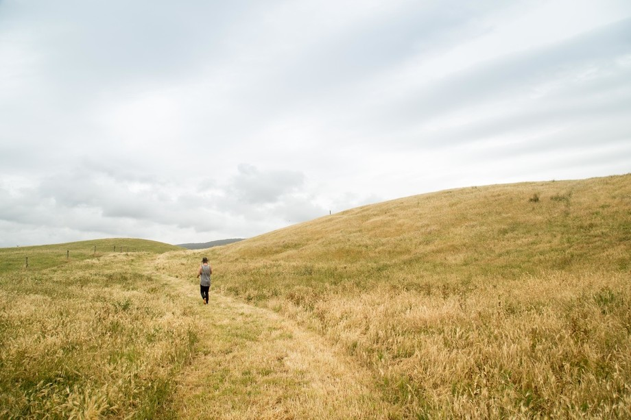 A walk through the golden fields which litter the hinterland of the Great Ocean Road Victoria