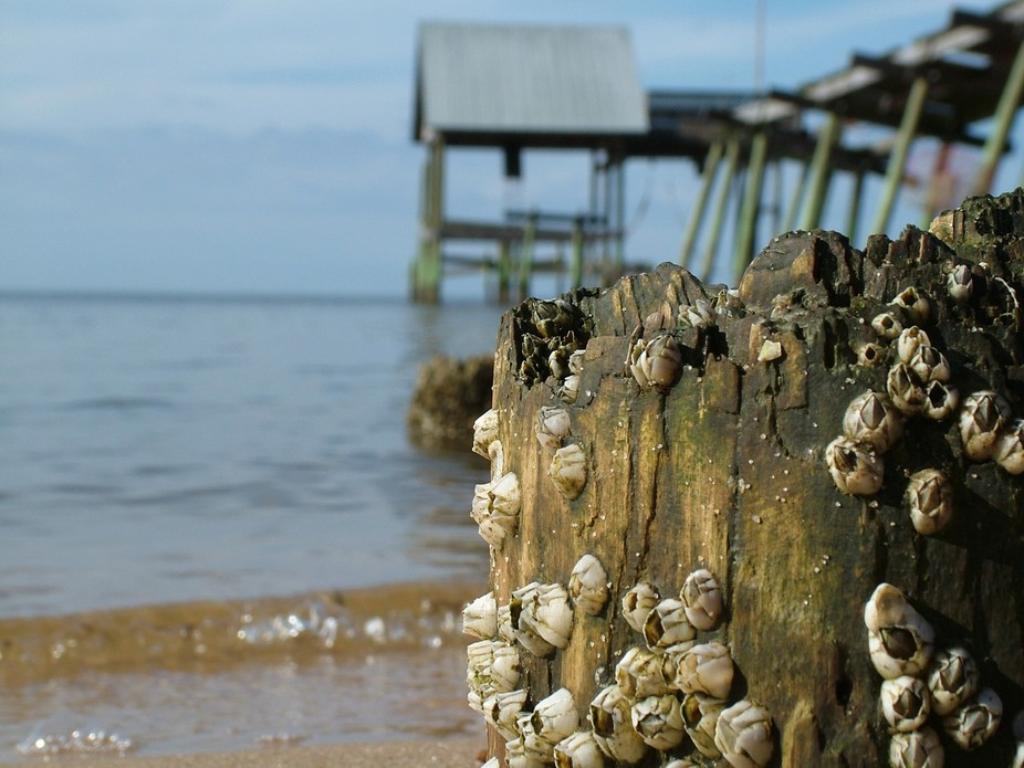 Katrina took the dock and left the barnacles.