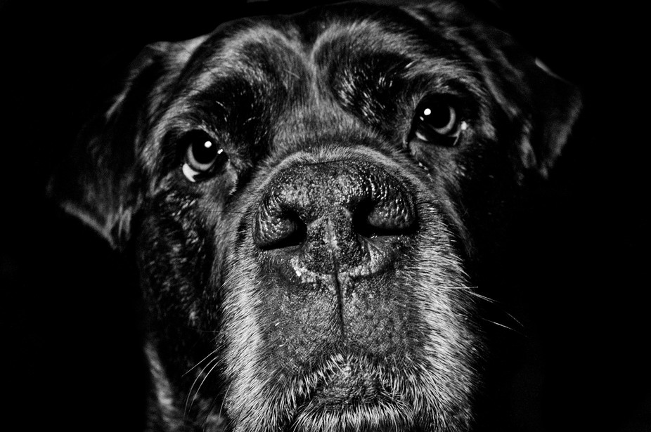 A posthumous post of my gorgeous Mastiff :) X