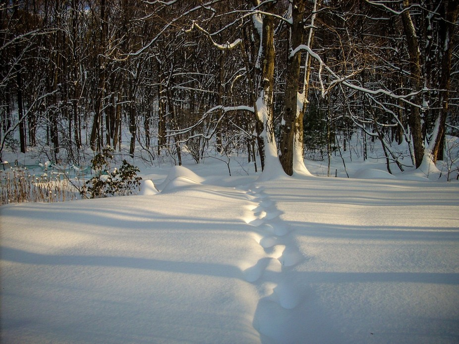 This foot path through the snow leads into the woods.  It was shot with a Nikon Coolpix; ISO 64, ...