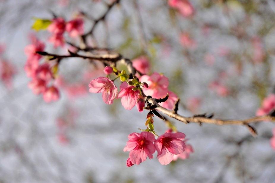 beautiful flower from winter Japanese