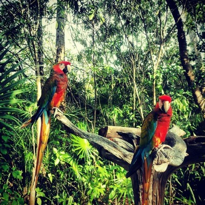 Parrots of Awesomeness