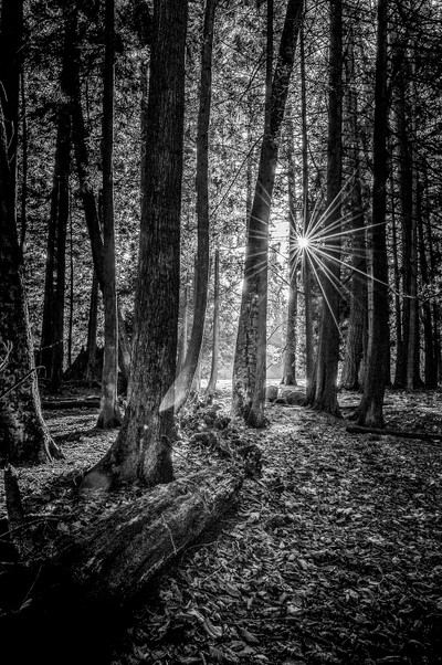 Sunlight Entering Forest