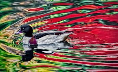 colorful-wake