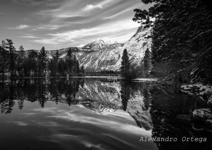 reflection intense  jpg (1 of 1) by alex271987 - Black And White Compositions Photo Contest