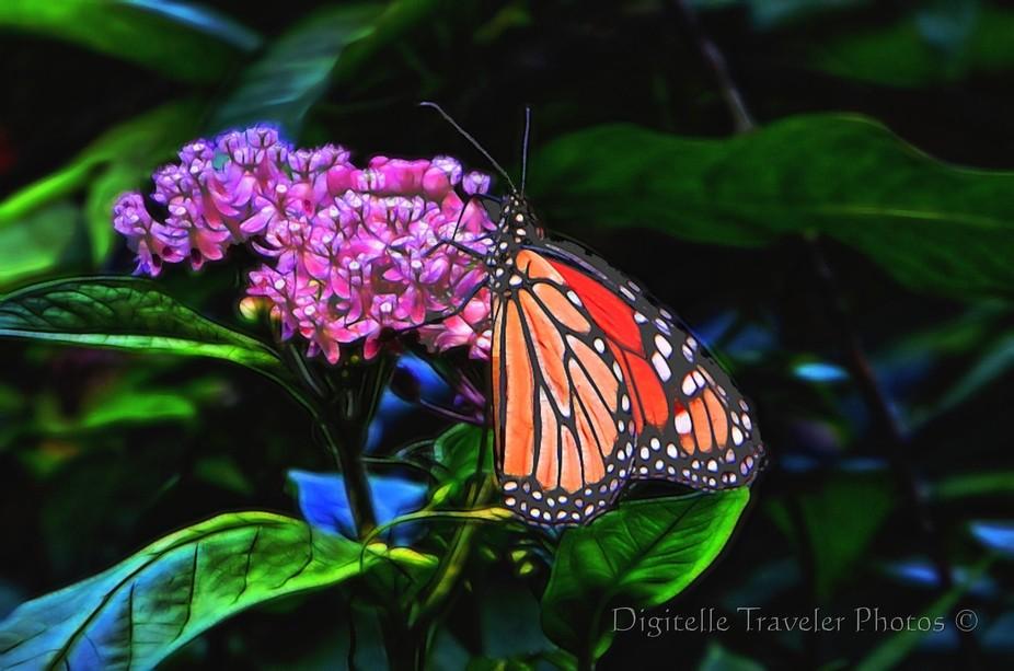 Butterfly Monarch3 wm