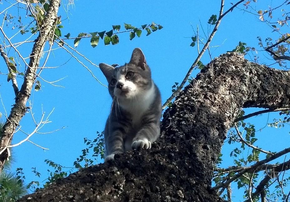 Tree Kitty