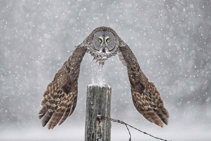 Take Off, Eh... by DanielParent - Image of the Year Photo Contest by Snapfish