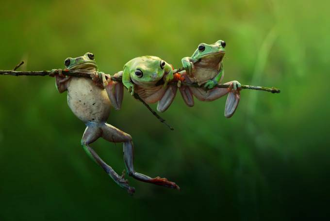 fairy frog story by vianz - Image of the Year Photo Contest by Snapfish