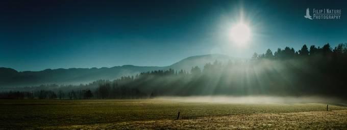 Fog through the forest by filiperemita - Magical Light Photo Contest