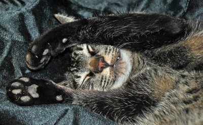 Tigger Sleeping