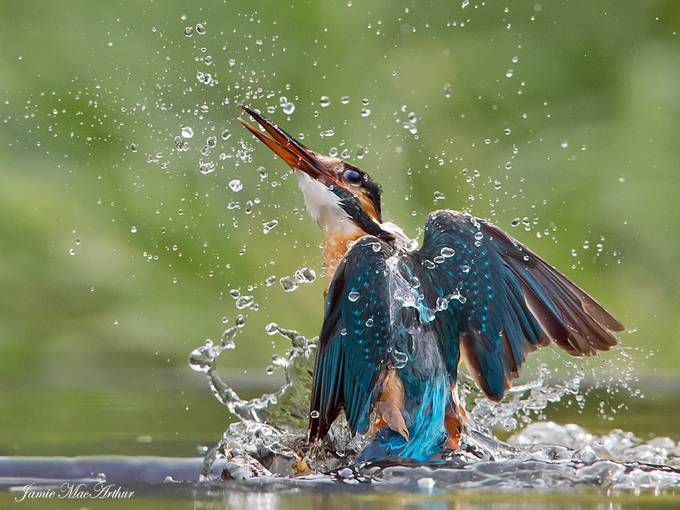 Wet and wild by Jamie-MacArthur - Image of the Year Photo Contest by Snapfish