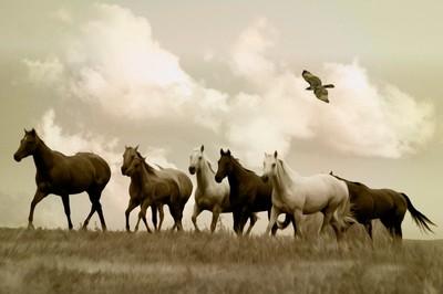 South Dakota Freedom