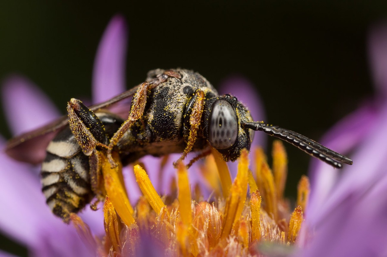 Insects and Flowers Photo Contest Winners!