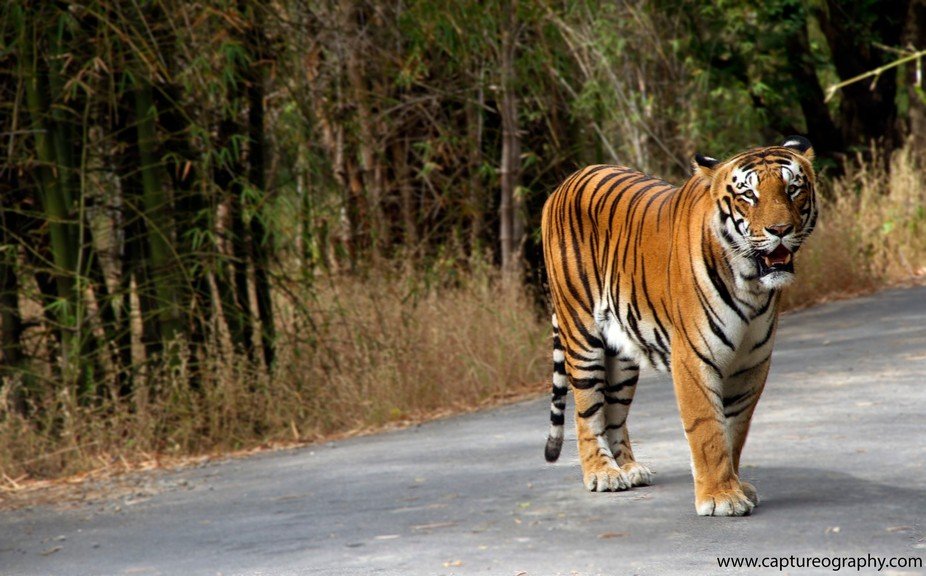 "An image made at Bannerghatta National Park    ""Rule of Space""   The image should prese..."