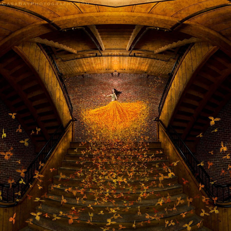 Golden Birds by CasaBay_Photo - Stairways Photo Contest
