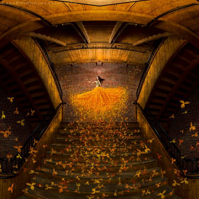 Golden Birds by CasaBay_Photo - People In Large Areas Photo Contest